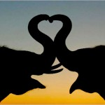 animals_in_love_1