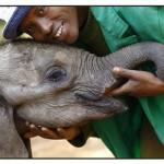 baby elephant w- keeper