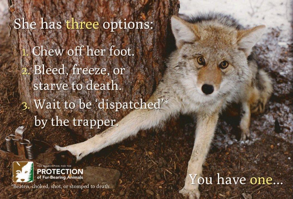 canada goose fur policy