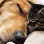 hd-cats-and-dog-images-wallpaper-620x388