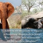 ivory-poaching