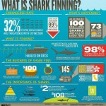 sharkfin_infographic