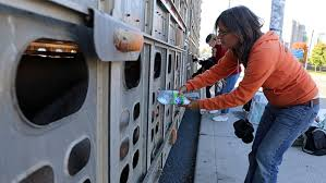"Anita Krajnc's Pig Trial and the Growing ""Save Movement"" for Farm Animals"