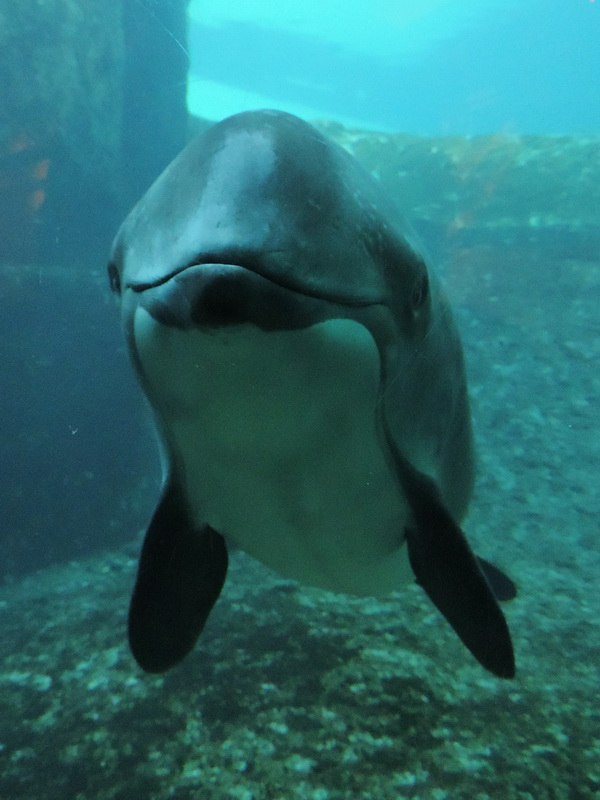 """Another Cetacean Dead at the Vancouver Aquarium, and Phillip Wollen's """"Animals Should Be Off the Menu"""" Debate"""