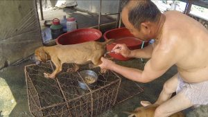 Speciesism and the South Korean Dog Meat Farms