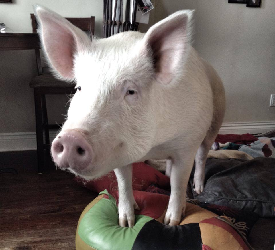 Encore show: Intentions and Reflections in the New Year, and Esther the Wonder Pig