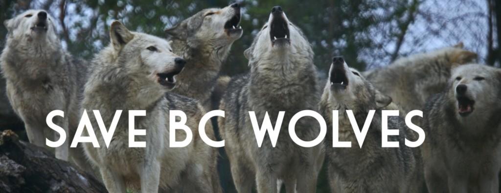 savebcwolves