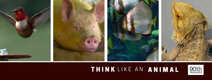 think-like-an-animal